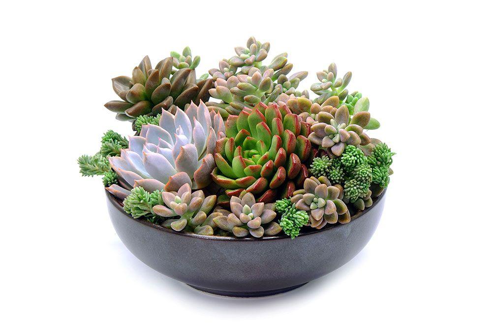 Succulents for floating shelf