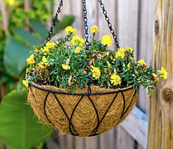 Plant Hangers & Chains